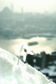 snowdrop's view